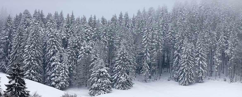 asociatia_forestiera_suceava