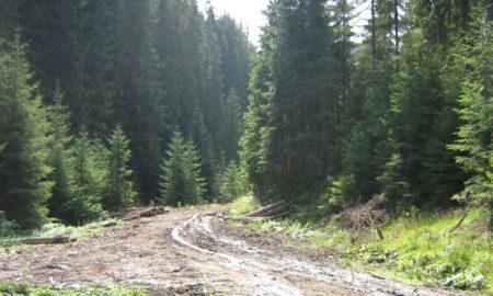 drum forestier Straja