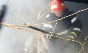aspru-incendiu-la-poieni-solca-20-stupi-de-albine-salvati