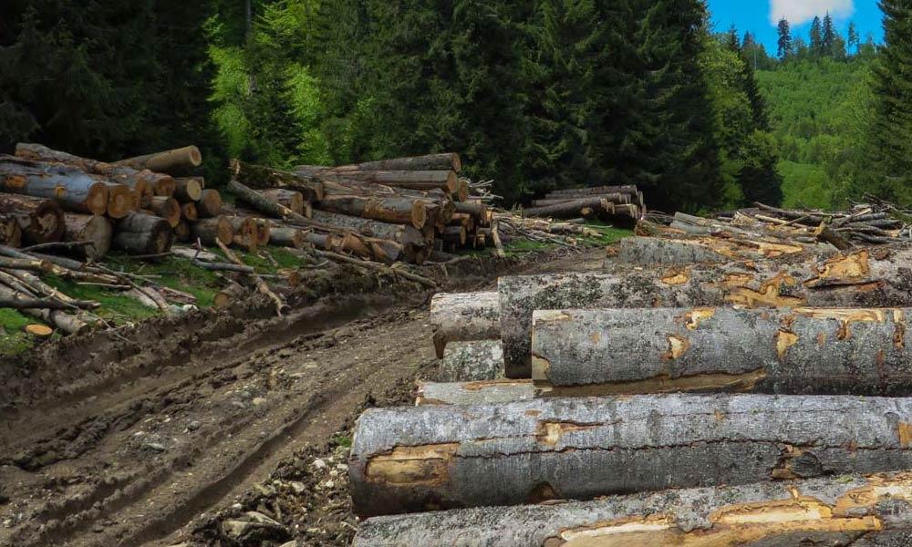 lemn-hardic-horodnic