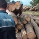 lemn-confiscat-la-dornesti