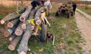 hoti-de-lemne