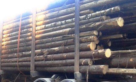 lemne-arbore