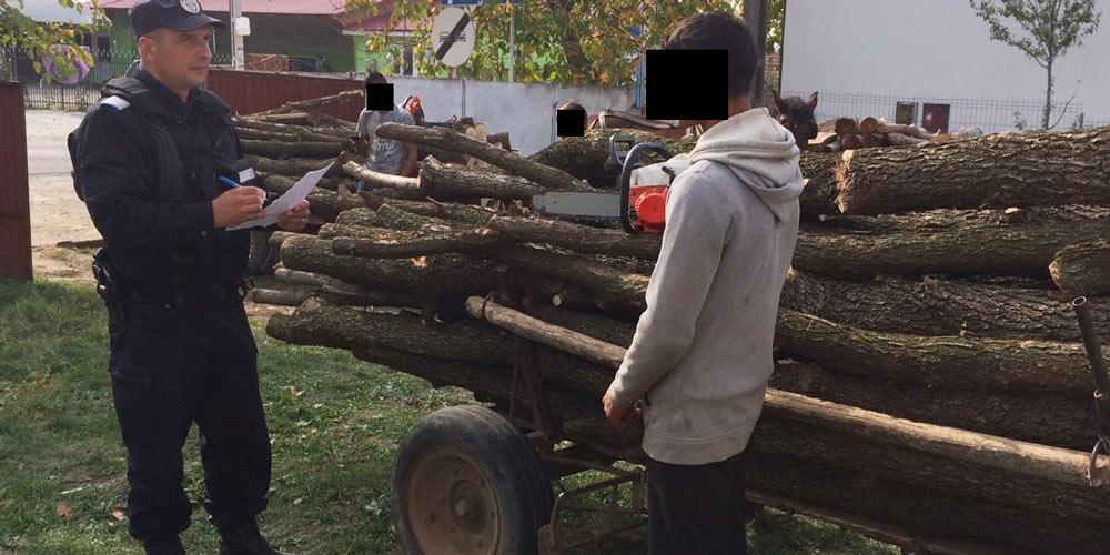 mai-multe-persoane-prinse-la-furat-de-lemne-din-padure