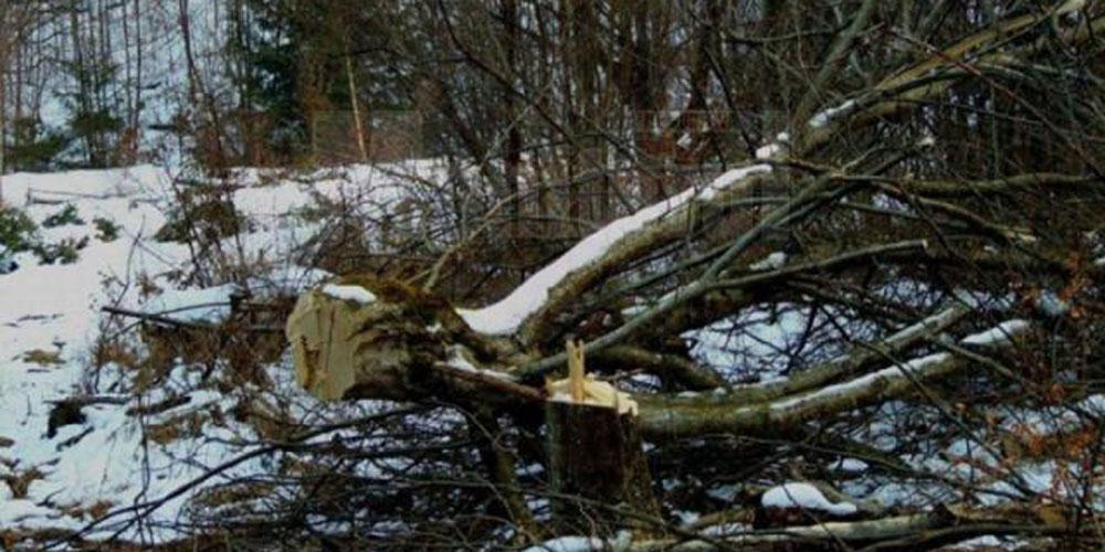 tanar-aflat-stare-grava-la-spital-dupa-ce-un-arbore-cazut-peste-el