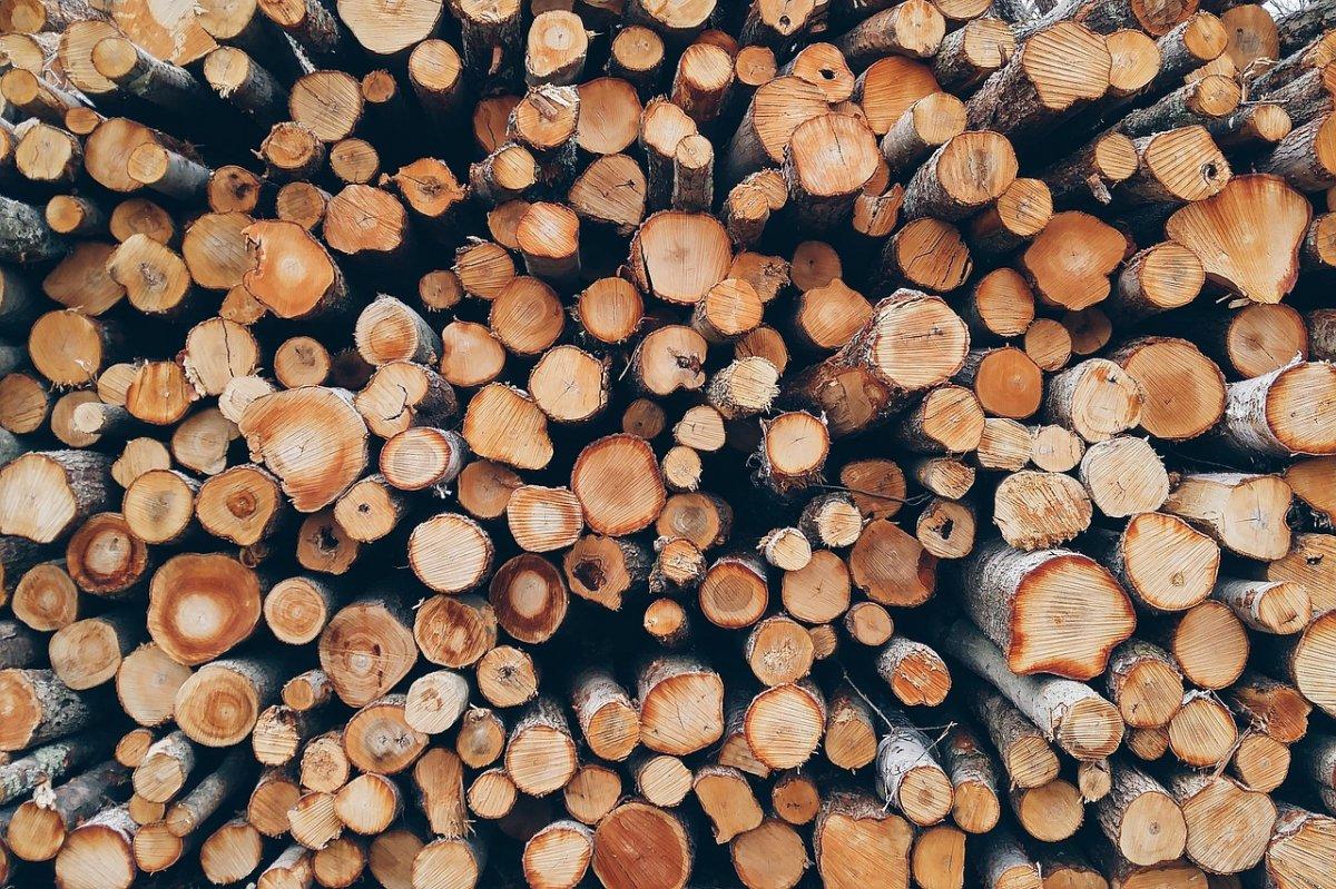 lemne-directia-silvica